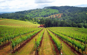 Winery Tours Portland, Oregon