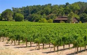 tours-wine