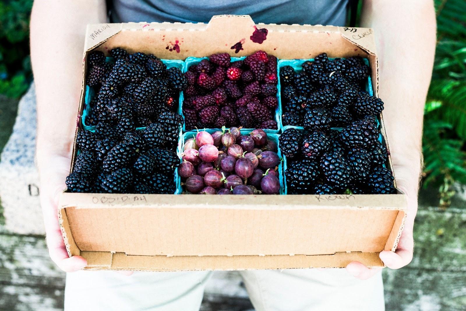 U-Pick Blackberries at Hood River