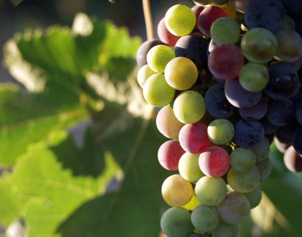 wine tasting in oregon
